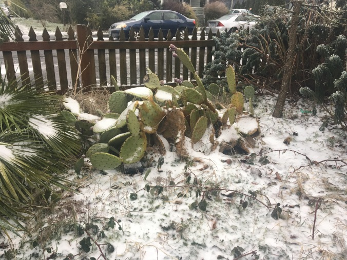 Cactus and snow